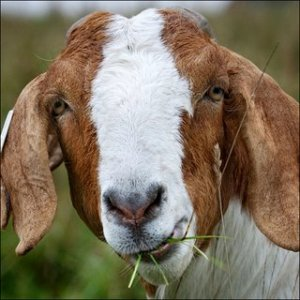 I know, goat. That was a downer. Stop judging me.