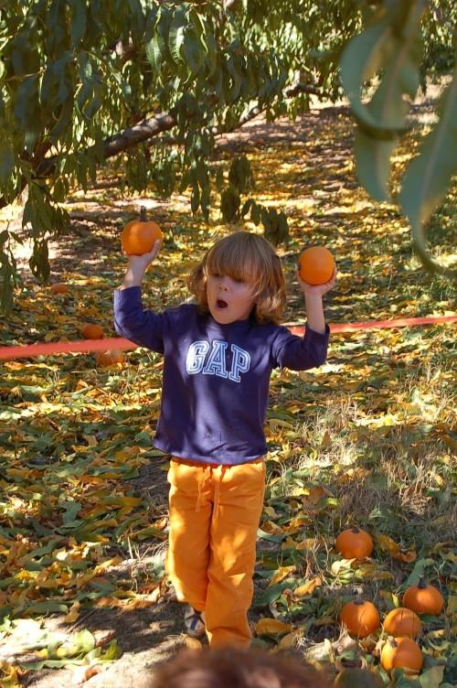 Cole and pumpkins